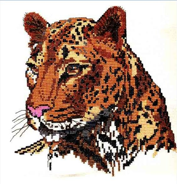 Описание красивый леопард