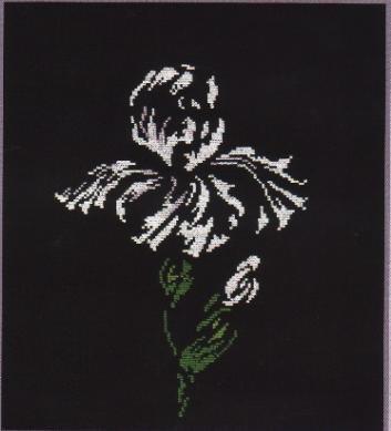 Белый ирис на черной канве