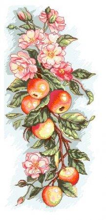 Ветка яблок