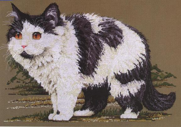 Шикарный персидский кот