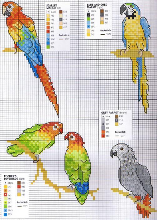 Попугайчики схема вышивки
